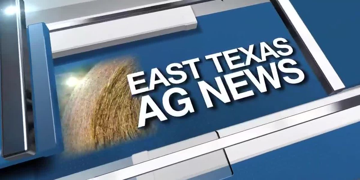 East Texas Ag News: Cattle prices lower this week