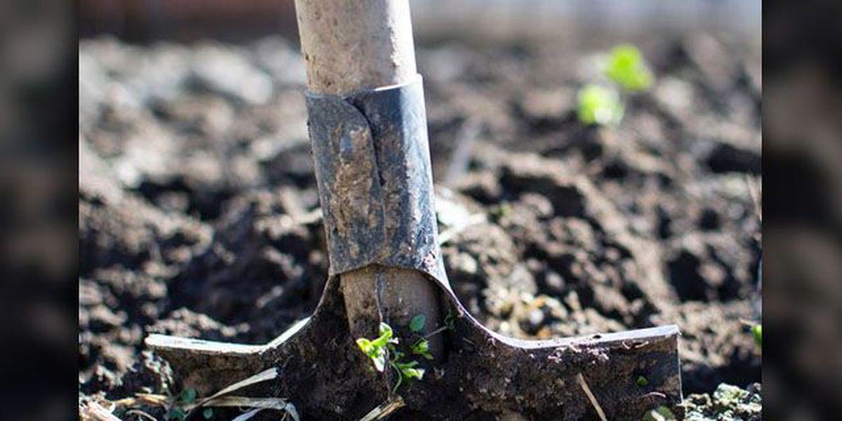 East Texas Ag News: Planning fall gardens