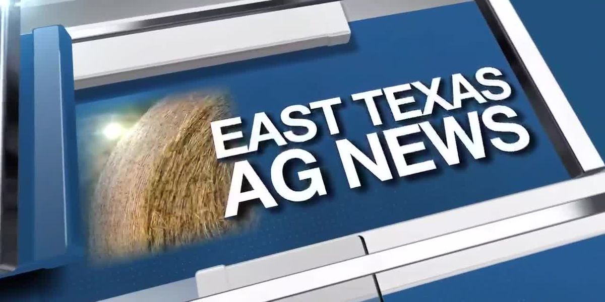 East Texas Ag News: Cattle prices lower compared to last week