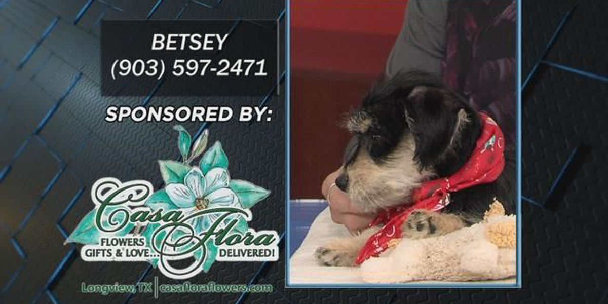 Pet Project: Betsey