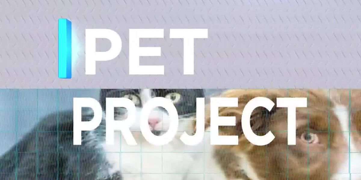 Gayle Helms from Pets Fur People joins us with June Bug for this week's Pet Project