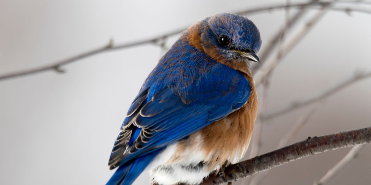 East Texas Ag News: Feeding birds in the winter months