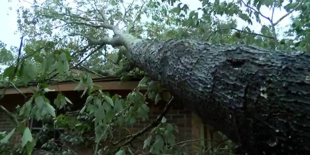 Sally: Downed trees on cars, homes in Miss. (no sound)