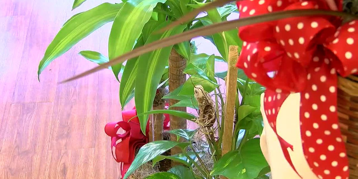 East Texas Flower Shop Prepares for Valentine's Day