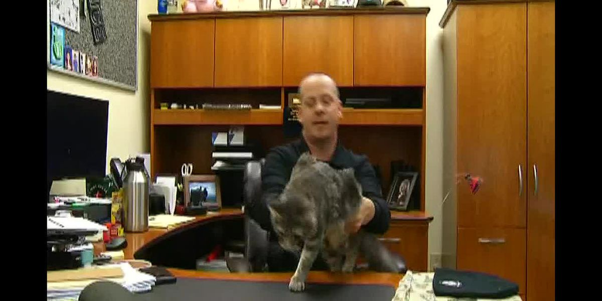 Mercy Meow: Police officer saves, adopts 'bait' cat used for dog fighting