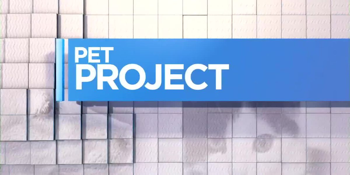 Gayle Helms joins us with Mutley for this week's Pet Project