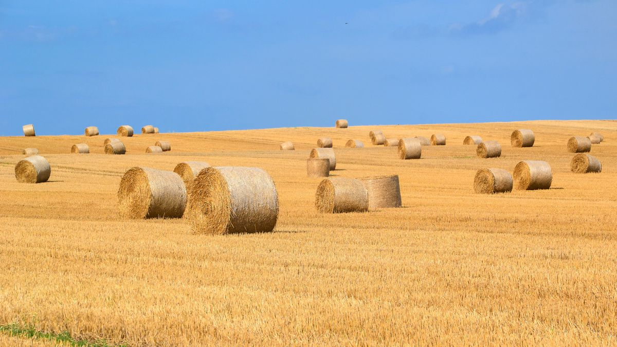 East Texas Ag News: How to properly cure hay