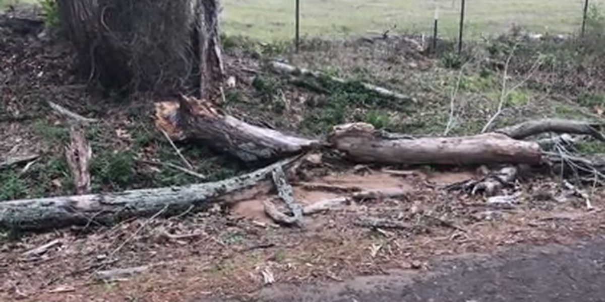 Gusting winds down trees on roadways