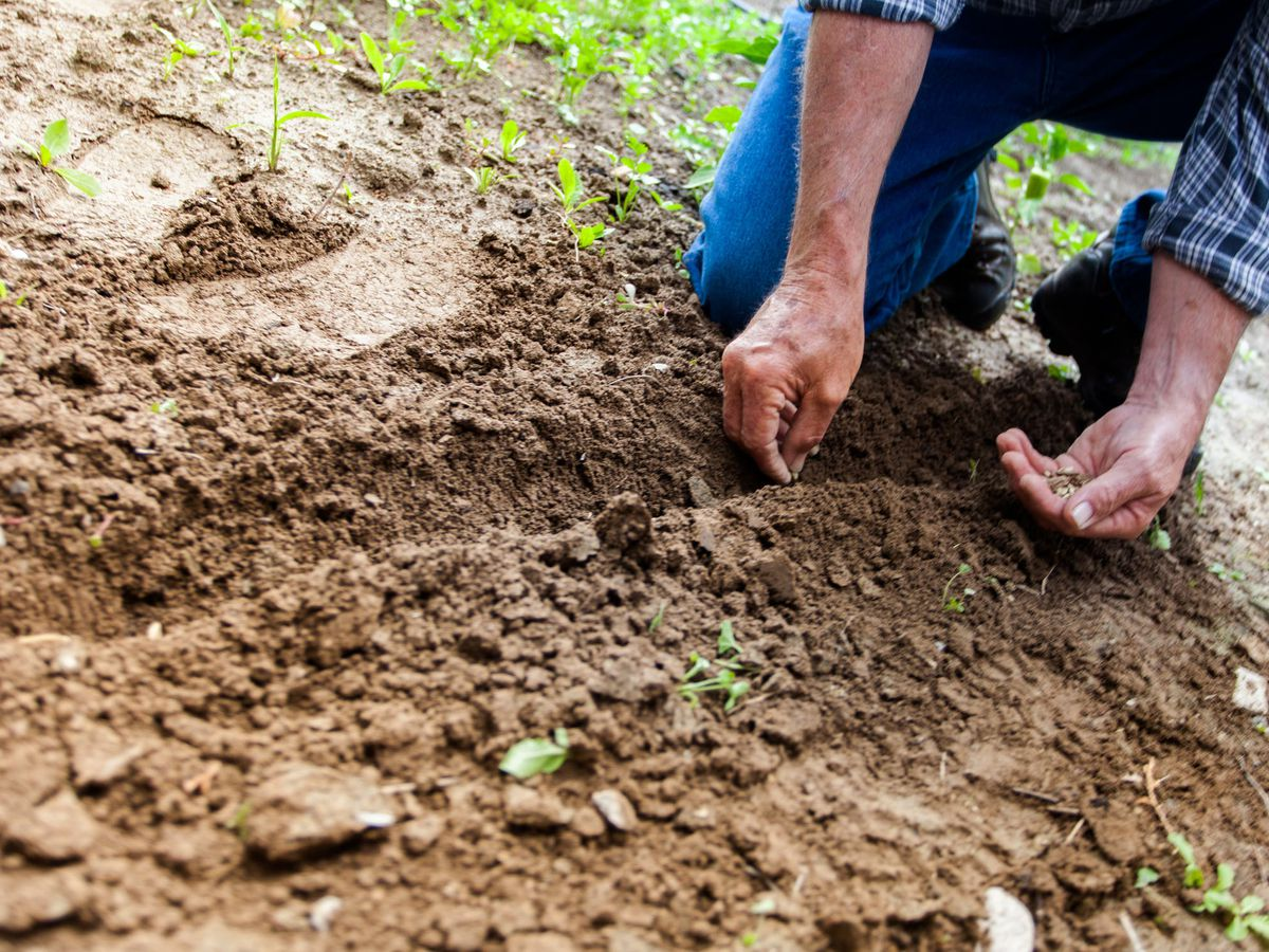 East Texas Ag News: What to replant in the late summer garden?