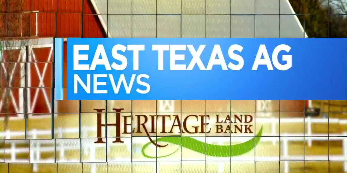 East Texas Ag News: This week's cattle, hay numbers