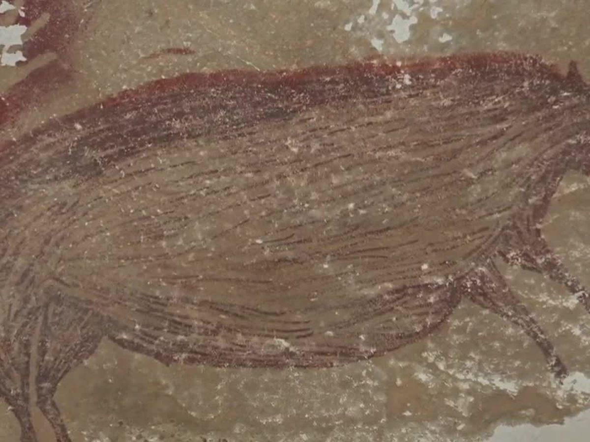 Painting of pig may be one of world's oldest cave art