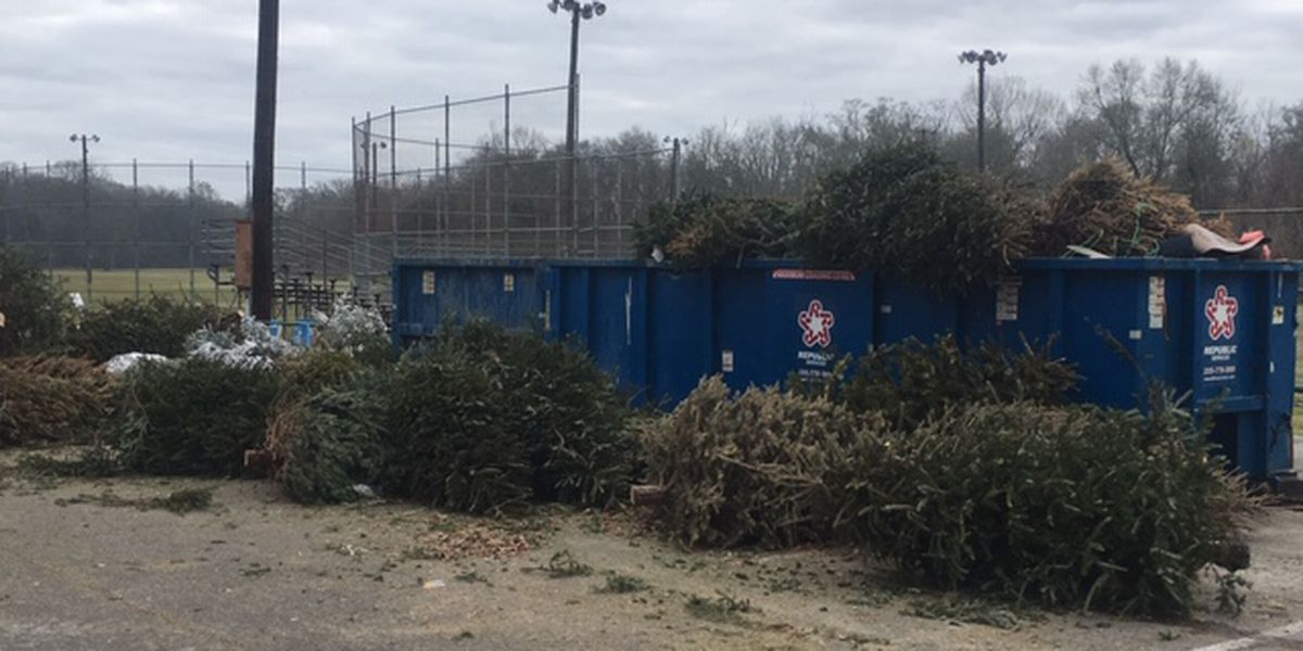 Recycled Christmas trees to be put to use around East Texas