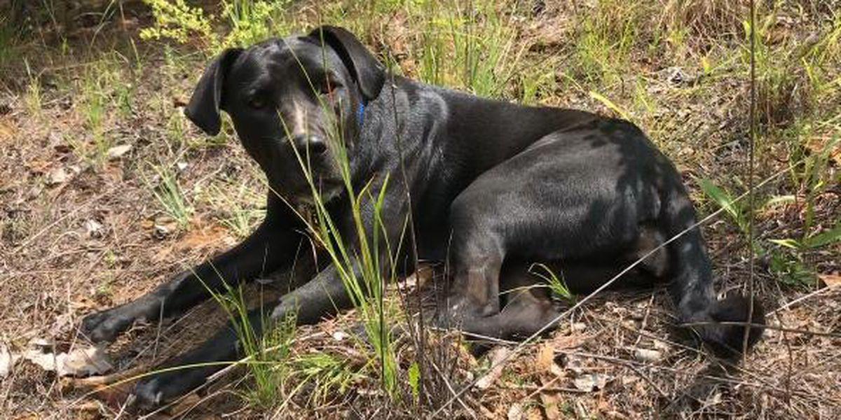 Family dog helps Upshur County law enforcement nab burglary suspect