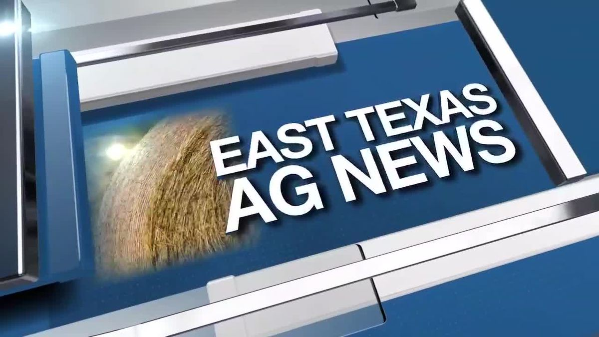 East Texas Ag News: Prices firm up as higher quality hay becomes scarce across Texas