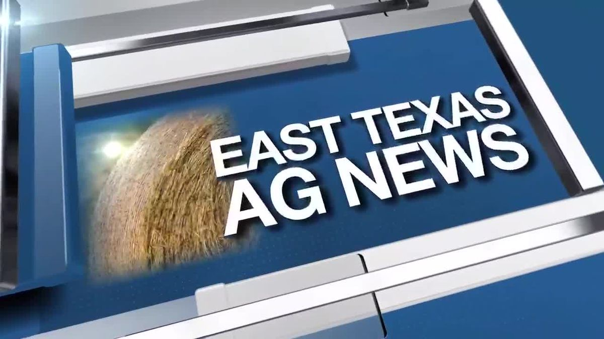 East Texas Ag News: Hay trades remain steady in most regions of Texas