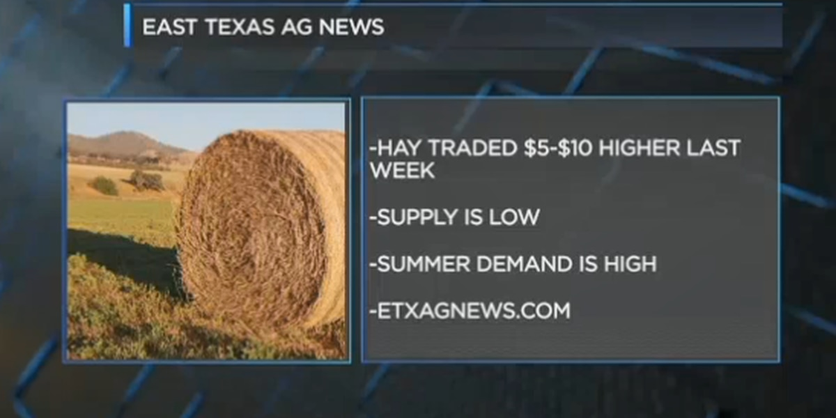 East Texas Ag News: The latest on cattle and hay prices