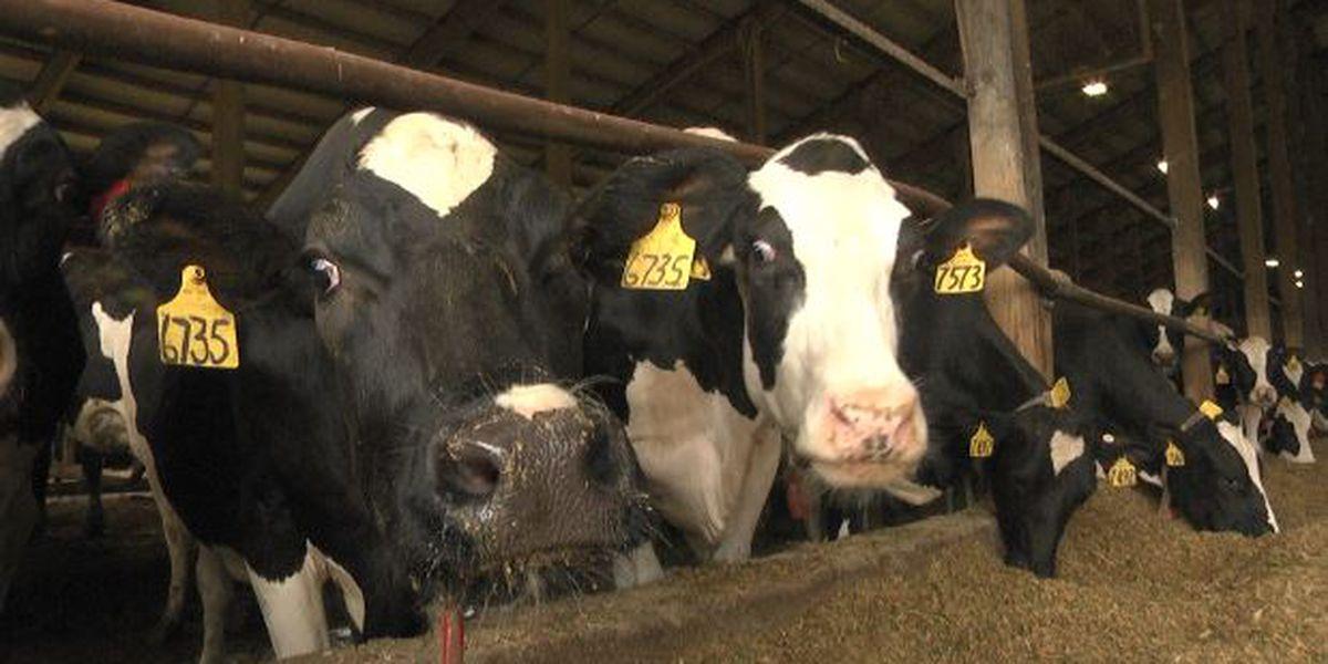 Dairy farmers still having to cut back on milk production