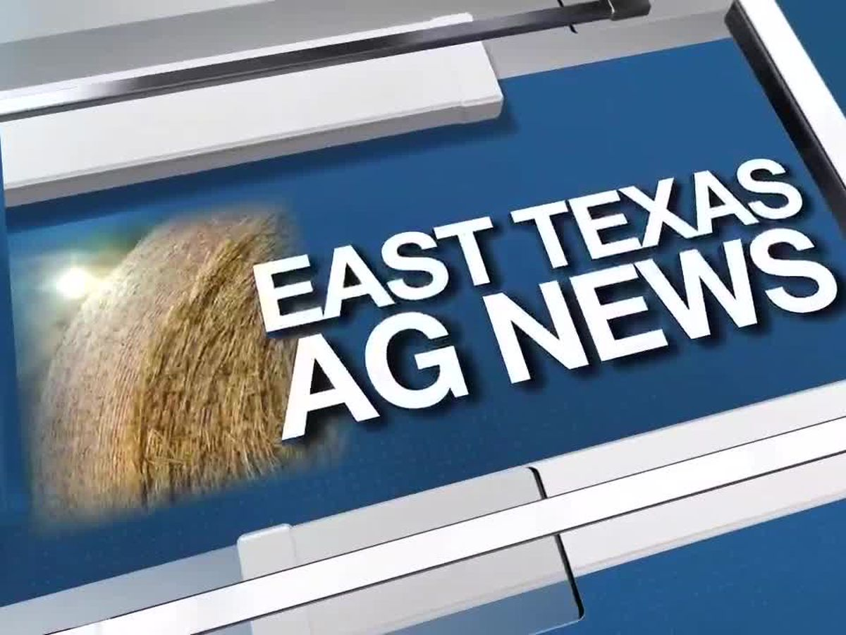 East Texas Ag News: Cattle prices up from last week