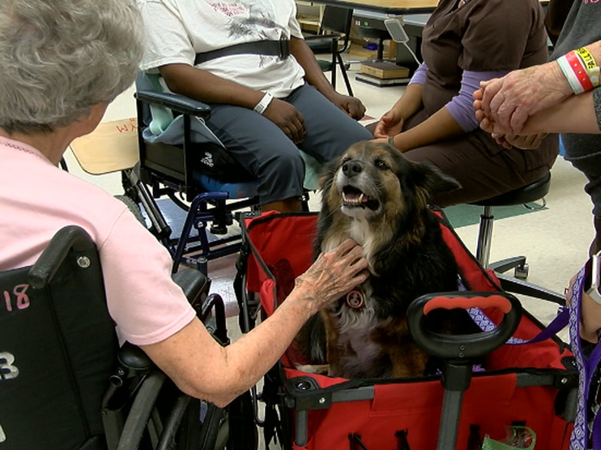 Rehab dog in Longview gives, receives therapy after hip surgery