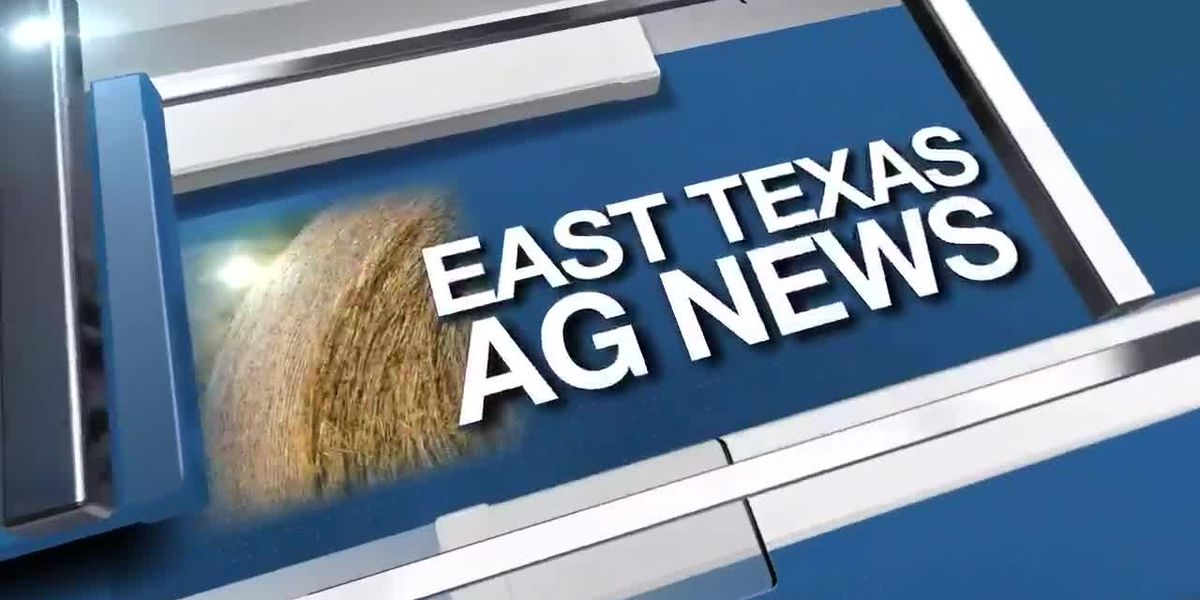 East Texas Ag News: Tips on maintaining healthy lawns