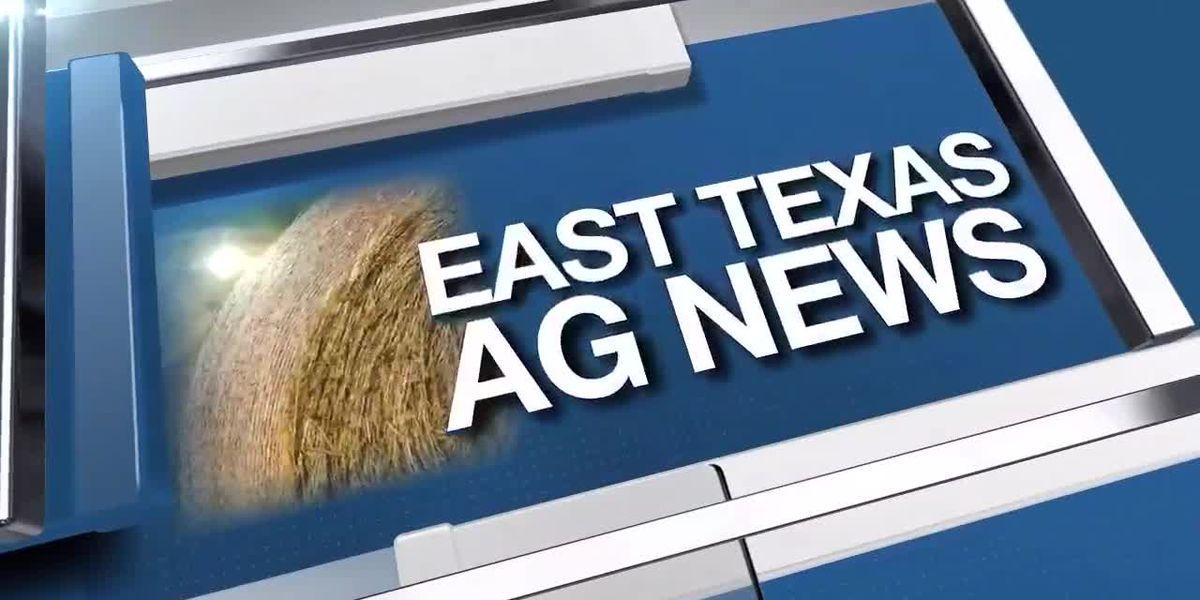 East Texas Ag News: Hay prices remain steady this week.