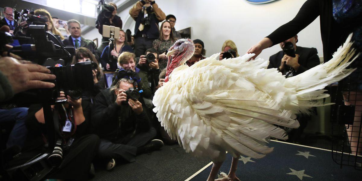 Trump to pardon a turkey ahead of Thanksgiving