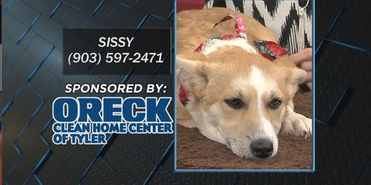 Pet project: Sissy