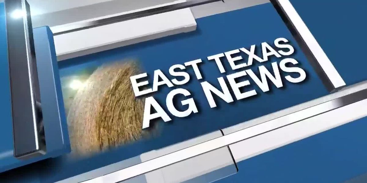 East Texas Ag News: Hay reports moved to biweekly due to limited sales and price changes