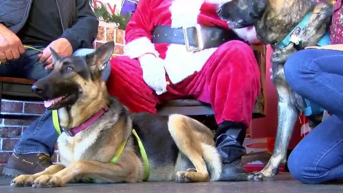 Santa 'Paws' came to town!