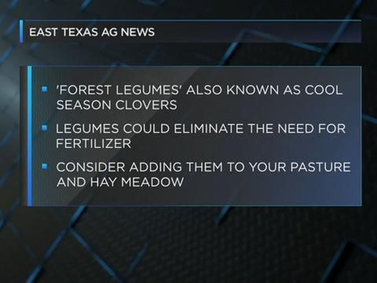 East Texas Ag News: Adding legumes to pastures and hay meadows