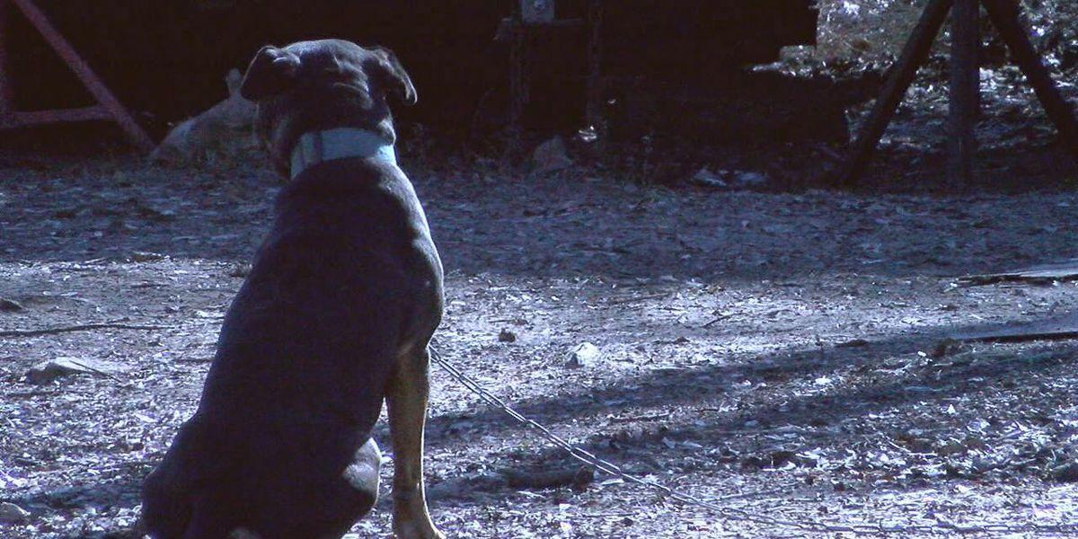 Texas animal cruelty bill makes progress in state legislature