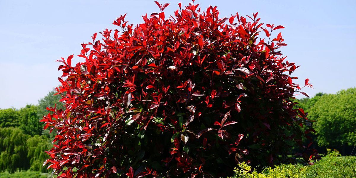 East Texas Ag News: Transplanting trees, shrubs in winter months