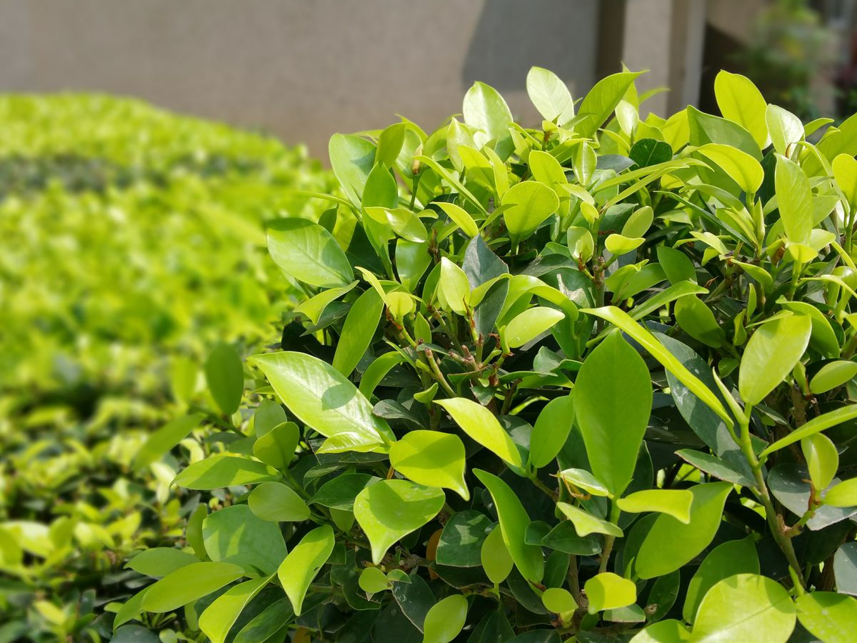 Great time to prune trees and shrubs