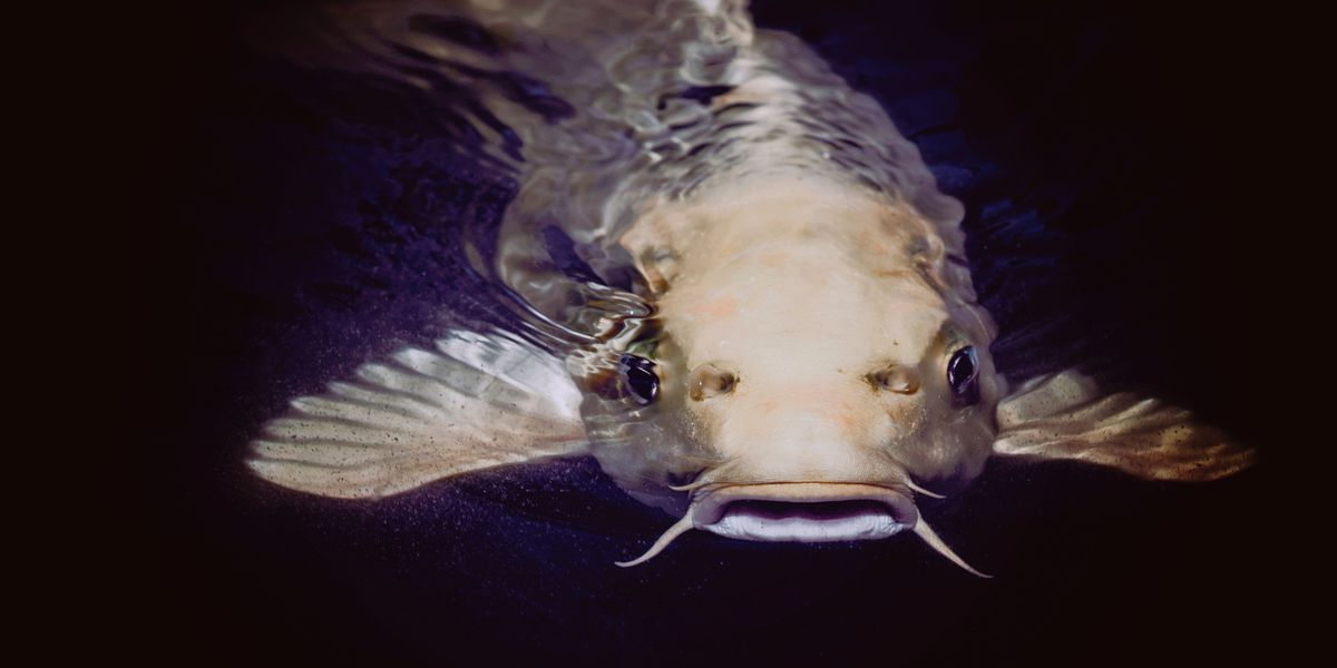 East Texas Ag News: Feeding catfish in winter