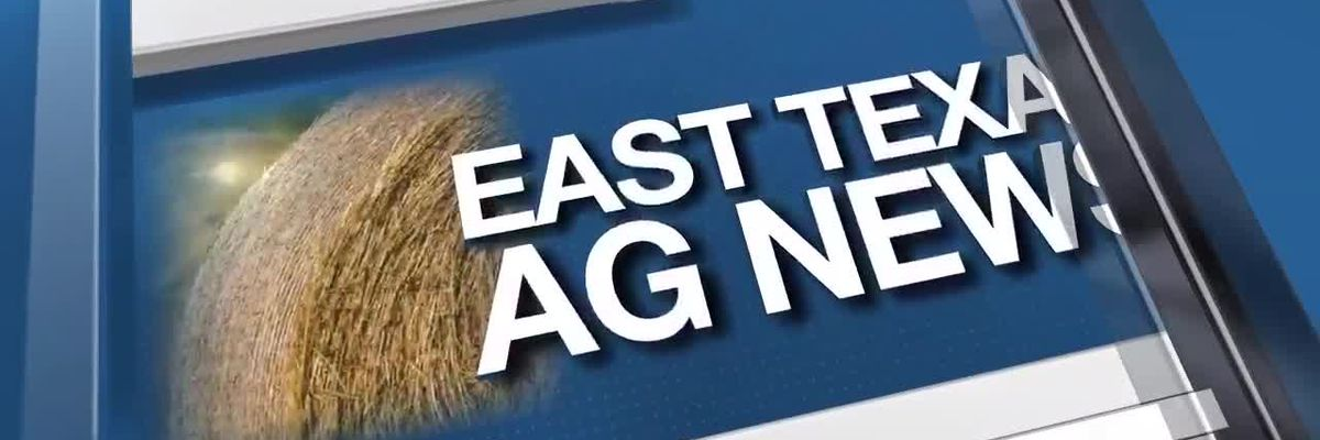 East Texas Ag News: Variations between forages