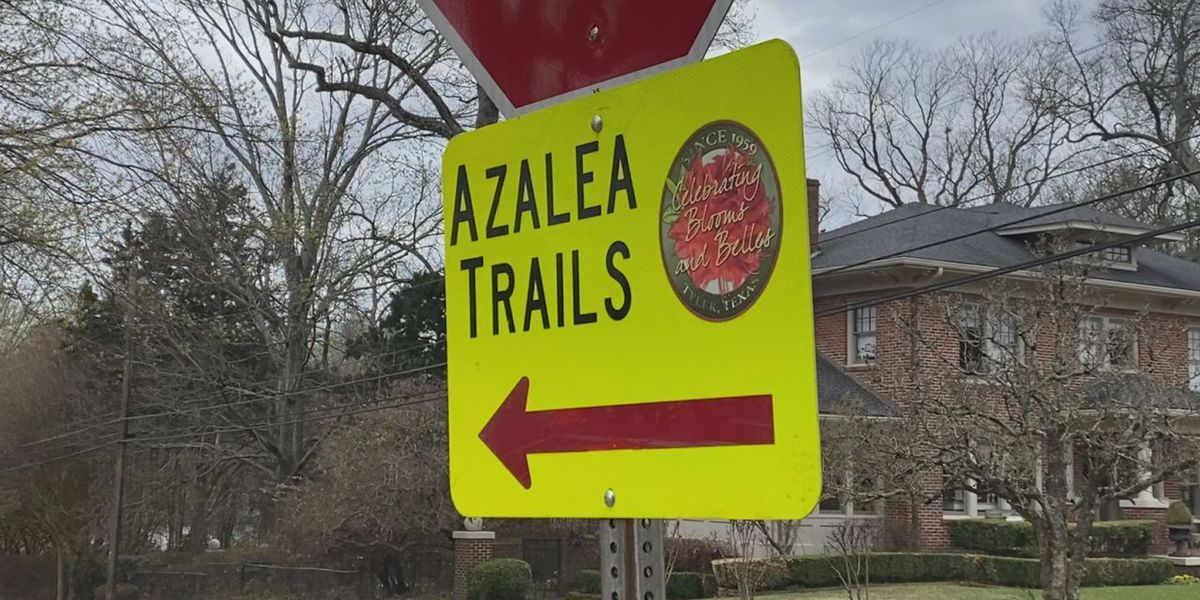 Today is opening day for the Azalea & Spring Flower Trail