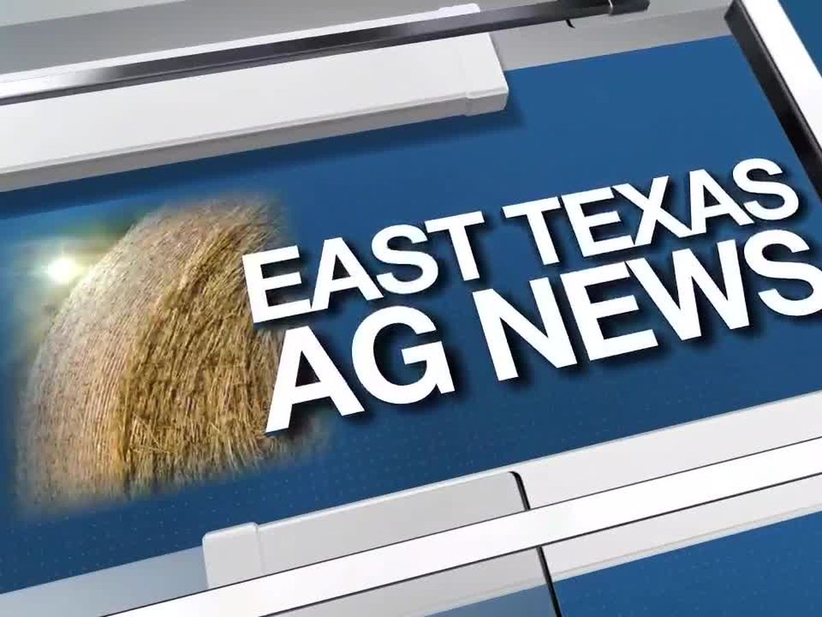 East Texas Ag News: This week's hay prices remain steady this week