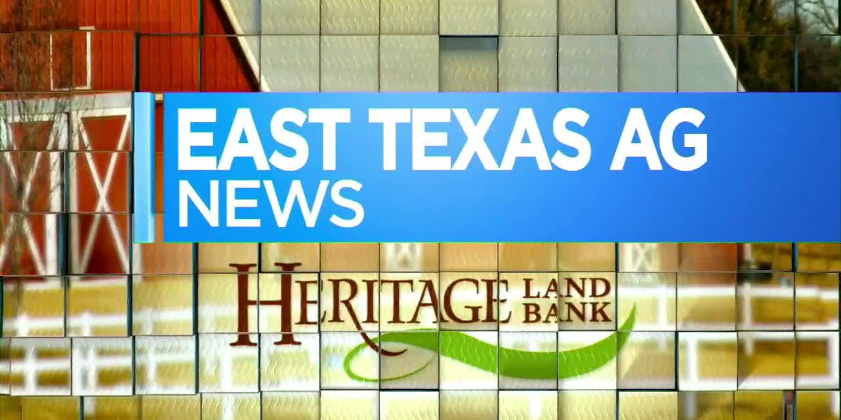 East Texas Ag News: Keeping your tomato plants healthy
