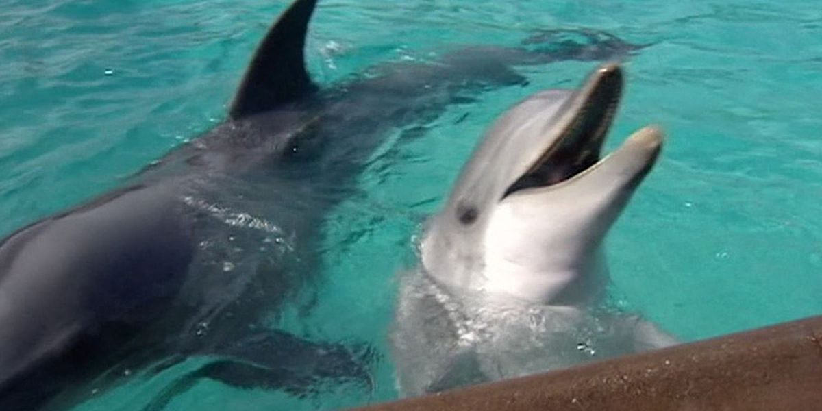 SeaWorld: Trainers will no longer ride on dolphins