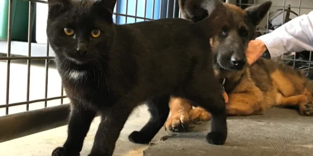 WEBXTRA: Inseparable dog, cat looking for new home