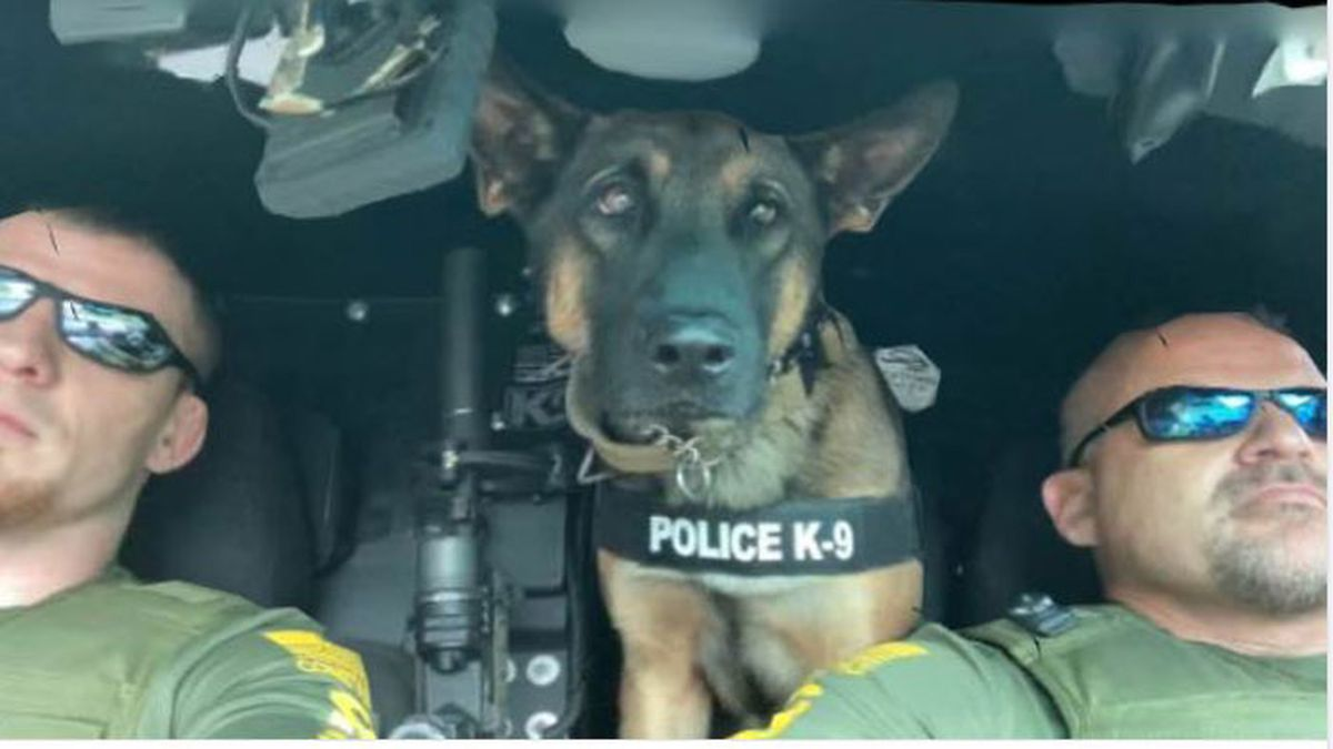 Wood County's new K9 officer catches assault suspect twice