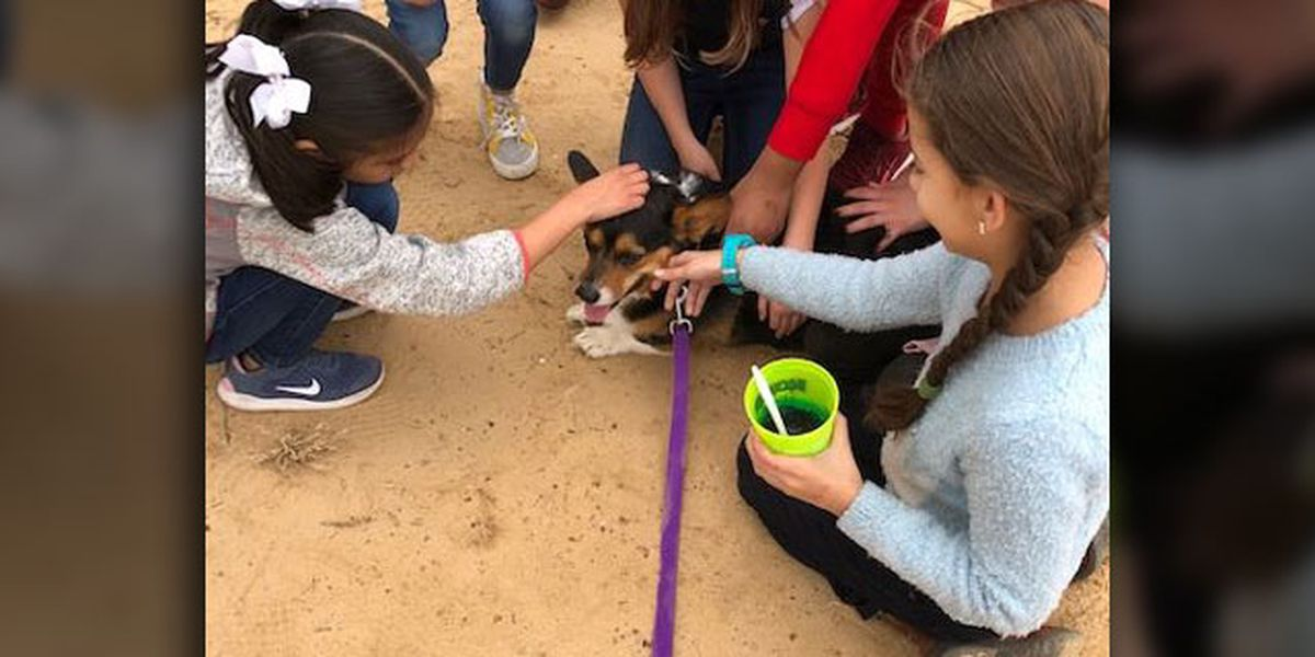 Winona ISD set to consider adding 'Gus' as elementary campus' emotional support animal