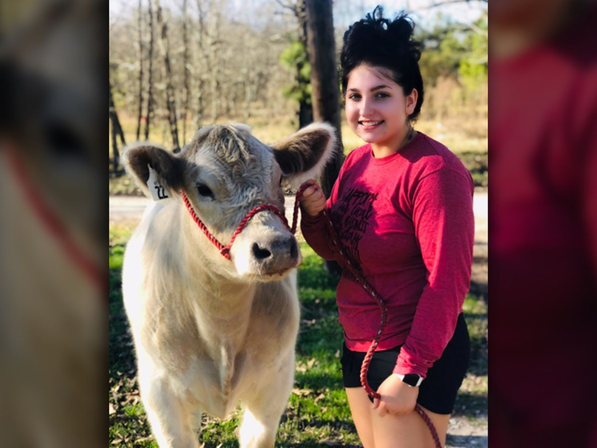 East Texas Ag News: Caley Choate shows a market steer at Angelina County Fair