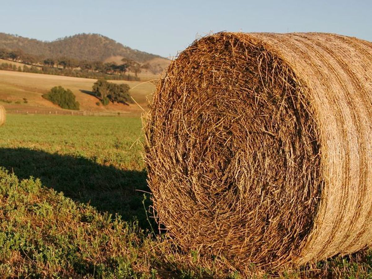 East Texas Ag News: Hay prices steady across the state