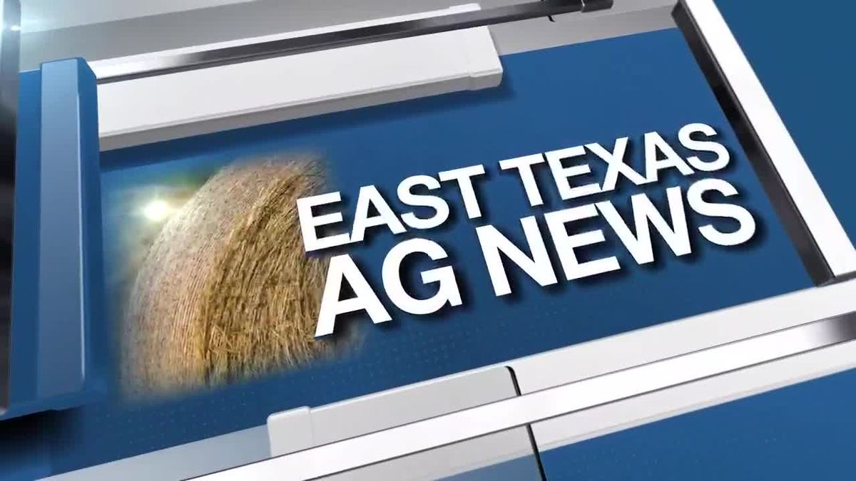 East Texas Ag News: Composting yard waste good for environment