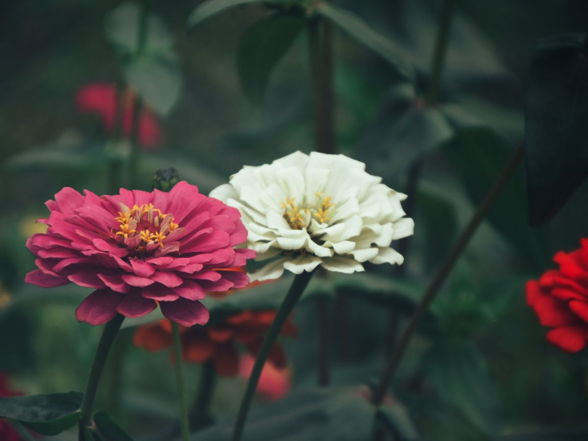 East Texas Ag News: Brightening up your landscape with summer annuals