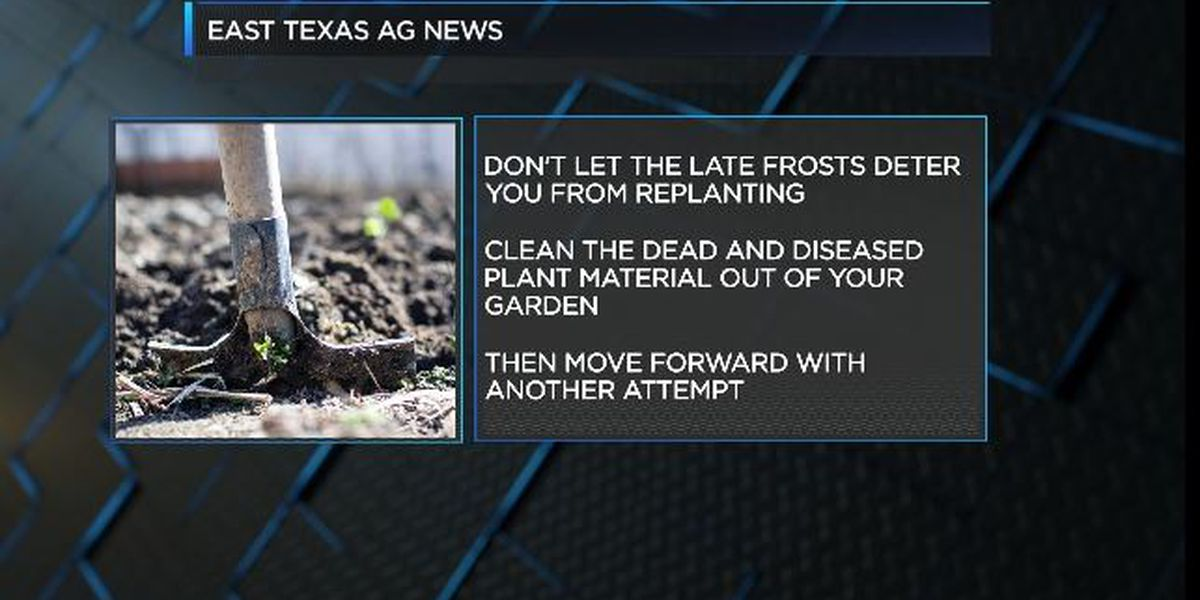 East Texas Ag News: Tips for replanting vegetables in your garden