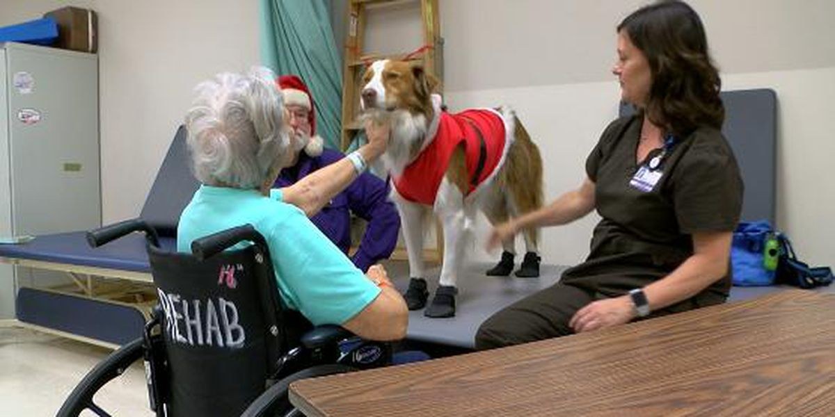 Pets help relax patients at Longview Hospital