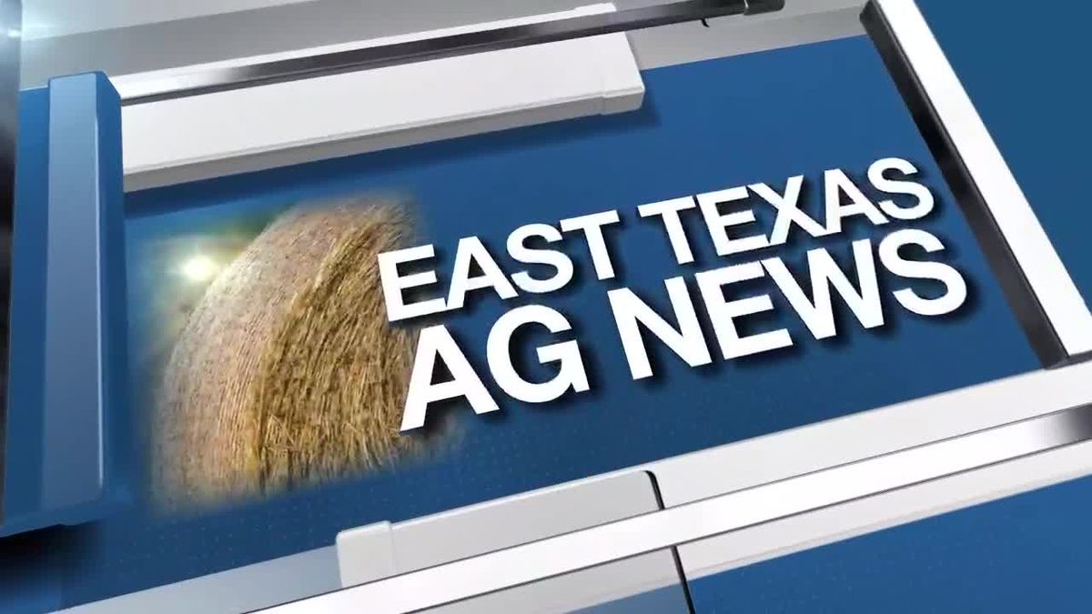 East Texas Ag News: January best month for transplanting plants