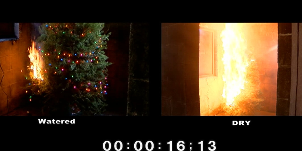 Christmas Tree On Fire.Firefighters Demonstrate How Quickly Fire Spreads In Dry Vs